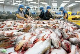 Cá tra và mục tiêu phát triển sản phẩm quốc gia